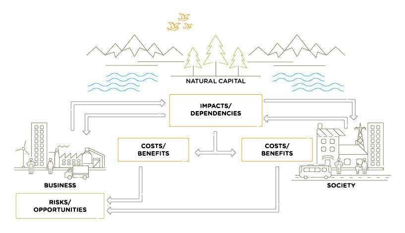 natural capital interactions