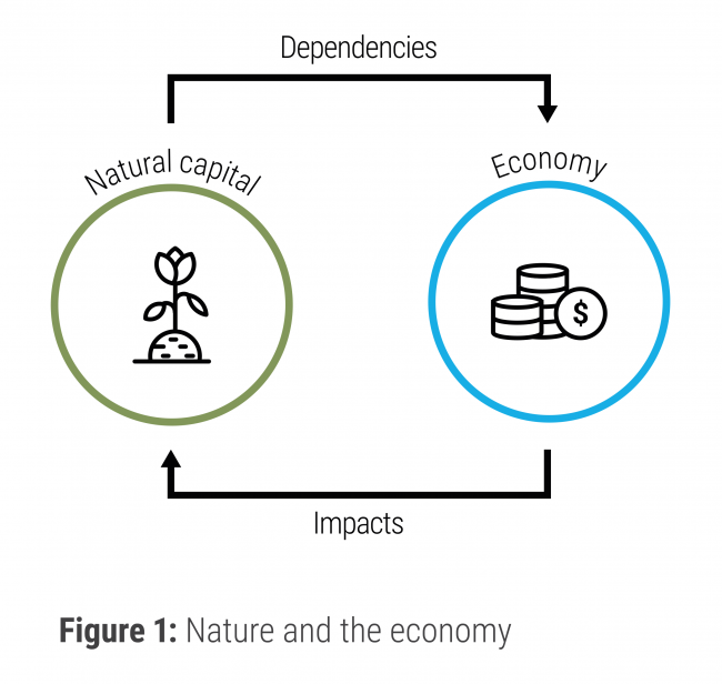 Nature and the economy infographic